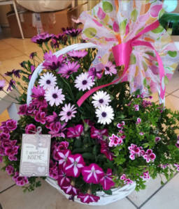 Festa della mamma pianta ornamentale