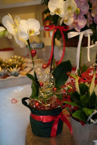 Amorosi-Eventi-Manciano-Natale-2020-11